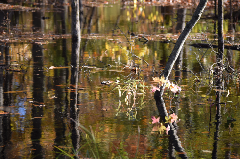 WATER_AMONG_TREES_DSC_0253